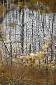 Autumn mood in the Murnauer Moos, Murnau, Germany