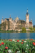 Tulips on the southern shore of Lake Schwerin invite you to take a stroll, Mecklenburg-Western Pomerania, Germany