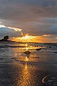 Abendsonne mit Lichtreflexion am Strand in Heiligenhafen, Ostsee, Ostholstein, Schleswig-Holstein, Deutschland