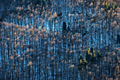 Graphic recording of the mountain forests, Upper Danube Valley Nature Park near Sigmaringen in winter, Swabian Alb, Baden-Wuerttemberg, Germany, Europe