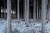 Frost on the bark of the trees, Upper Danube Valley Nature Park near Sigmaringen in winter, Swabian Alb, Baden-Wuerttemberg, Germany, Europe