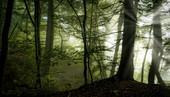 Geheimnisvoller Morgen im Buchenwald, Wald in Bayern, Deutschland