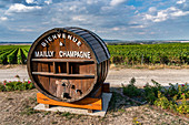 Wine growing in Champagne, Montagne de Reims, Route du Champagne, Mailly Champagne, France