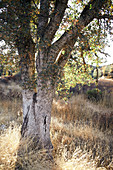 Tree in Pinnacles National Park, California, USA.