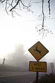 Warning sign for deer crossing in the morning mist at Point Reyes, California, USA.