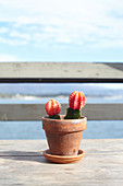 Cacti as table decorations on Stearns Wharf in Santa Barbara, California, USA: