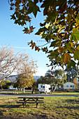 Picnic area at the Carpinteria Campground, Santa Barbara, California, USA.