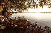 Danube Delta: riparian willows at sunset in April, Mila 23, Tulcea, Romania.