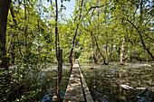 Donaudelta im April, Steg über das Wasser im Wald von Letea, Tulcea, Rumänien.