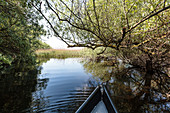 Boat trip in April in the Danube Delta through the thicket of a narrow arm of the water Mila 23, Tulcea, Romania.