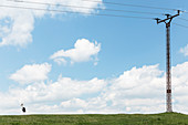 White stork, utility pole and power lines on a canal bank in the Danube Delta in April, Mila 23, Tulcea, Romania.