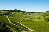 Vineyards, near Ihringen, Kaiserstuhl, Baden-Württemberg, Germany
