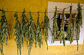 Herbs on a line while drying, homemade with herbs from the own garden