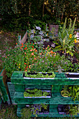 Raised bed with herbs, homemade with herbs from your own garden