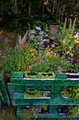 Hochbeet mit Kräutern, Selbstgemachtes mit Kräutern aus dem eigenen Garten