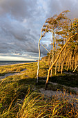 Afternoon mood on the west beach of Darß in the Western Pomerania Lagoon Area National Park, Fischland-Darß-Zingst, Mecklenburg-Western Pomerania, Germany, Europe.