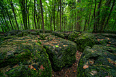 Boulders in the druid's grove, forest in the franconian Switzerland, Bavaria, Germany, Europe