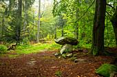 Autumn in the Steinwald Nature Park, Erbendorf, Tirschenreuth, Upper Palatinate, Bavaria, Germany