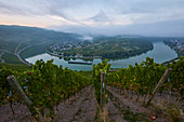 View before sunrise from the Kröver Nacktarsch vineyard to the Moselle loop of Kröv, Rhineland-Palatinate, Germany, Europe