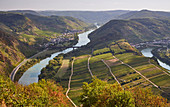 View from Calmont to the Moselle loop near Bremm, Calmont, Rhineland-Palatinate, Germany, Europe