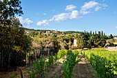 View of San Gusmé, Siena, vineyards in Tuscany, Italy
