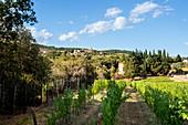 View of San Gusmé, Siena, vineyards in Tuscany, Italy