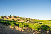 View of San Gusmé, Siena, Tuscany and vineyards, Italy