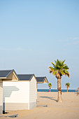 Palm trees on a lonely beach with white small wooden bathing huts, Forte dei Marmi, Tuscany, Italy