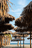 Palm trees and umbrellas against a clear blue sky, beach, Forte dei Marmi, Tuscany, Italy
