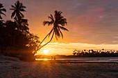 Sunset on the beach with palm trees, Boipeba Island, Bahia, Brazil, South America