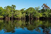 Rainforest on the Amazon near Manaus, Amazon Basin, Brazil, South America