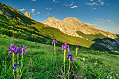 Wild Iris with Picu Urriellu in the background, Irises, Refugio Terenosa, Naranjo de Bulnes, Picos de Europa, Picos de Europa National Park, Cantabrian Mountains, Asturias, Spain
