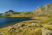 Lac Gentau with tent city and herd of animals, Refuge d´Ayous in the background, Lac Gentau, Pyrenees National Park, Pyrénées-Atlantiques, Pyrenees, France