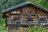 Flower-decorated alpine pasture, Glockner Group, Hohe Tauern, Hohe Tauern National Park, East Tyrol, Austria