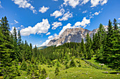 View through the mountain forest to the Zugspitze in summer, Ehrwald, Tyrol, Austria