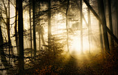 Sun rays in the foggy, snow-free winter forest, Bavaria, Upper Bavaria, Germany