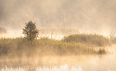 Foggy September morning in Weilheimer Moss, Weilheim, Upper Bavaria, Bavaria, Germany