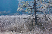 Hoar frost in the forest at the Easter lakes
