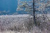 Raureif im Wald an den Osterseen, Bayern, Deutschland