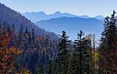 Autumn in the mountain forest above Jachenau, Upper Bavaria, Bavaria, Germany
