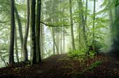 Morgens im frühlingshaften Buchenwald, Bayern, Deutschland