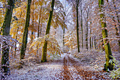Surprising snowfall in autumn on the Isar high bank, Baierbrunn, Bavaria, Germany