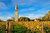 Old church tower in the vineyard on Mazzorbo island, Burano, lagoon, Veneto, Italy