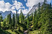 Bergwald untehalb des Seebensee, Ehrwald, Tirol, Österreich