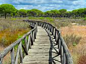 Board walk in  Parque Nacional de Donana, Almonte, Spain
