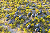 Aerial view of elephants, Okavango Delta, Botswana, Africa
