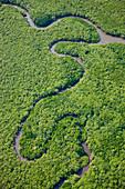 Aerial view of rain forest, Daintree River, Daintree National Park, Queensland Australia