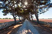 Track, Apulia, Puglia, Italy
