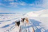 Dog sledding, E. Greenland