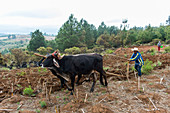A farmer is plowing his field with oxen near the Mixtec village of San Juan Contreras near Oaxaca, Mexico.